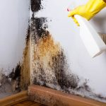 Can Rubbing Alcohol Kill Mold?